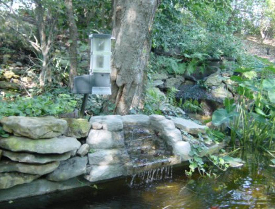 pondpic415-316-store-carousel.original.jpg